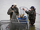 Netting fish out of the fyke net